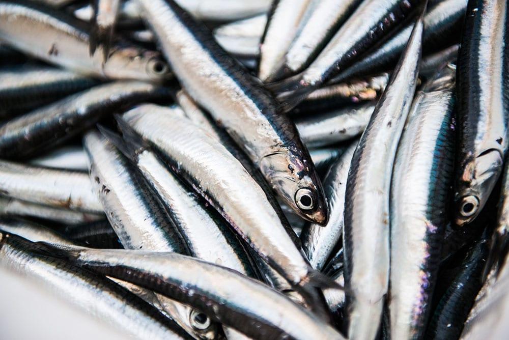 Mercato del pesce - Gaeta- Host in Gaeta